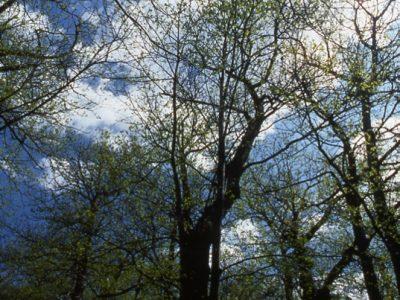 Corbara - Natura emersa